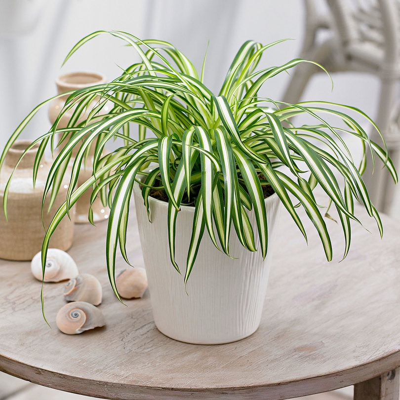 8 Air Purifier Plants That Are Must Have For Your Home To ...